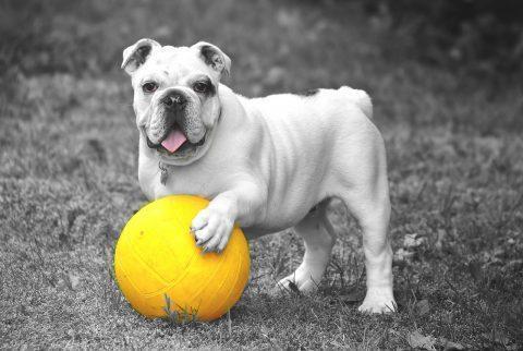 การจัดกลุ่มสุนัขเลี้ยง จัดอย่างไรมีคำแนะนำ