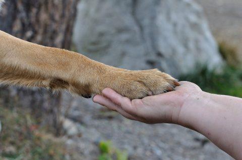 ความรู้สึกและสัญชาตญาณของสุนัข